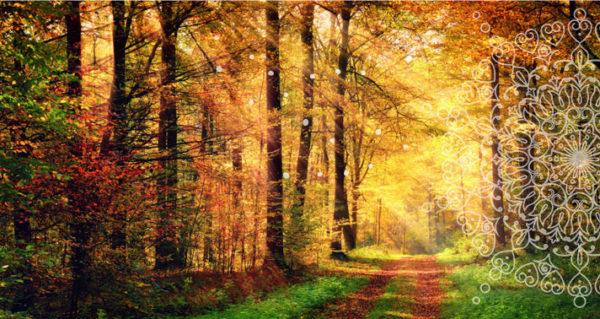De herfst breekt aan