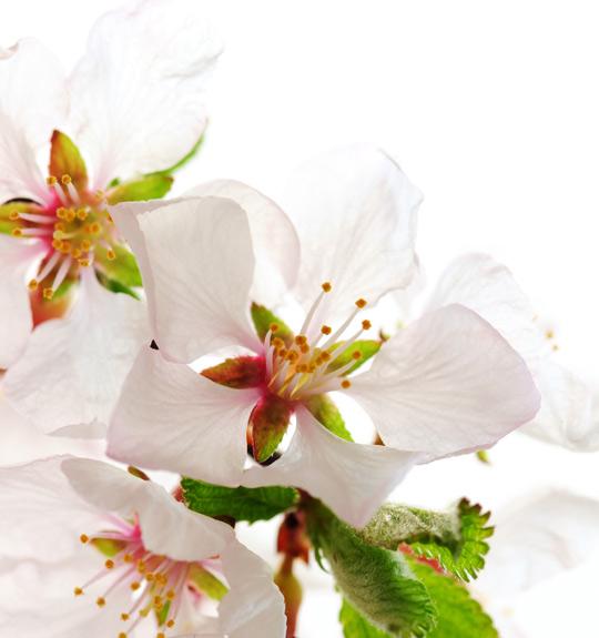 Für den Frühling